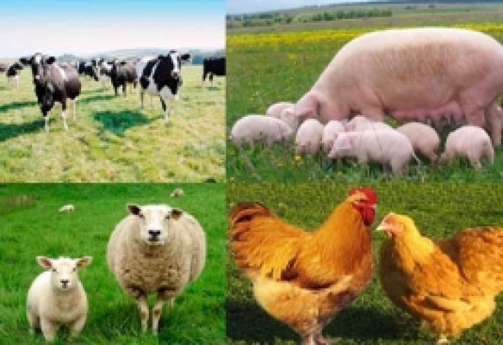 Картинки по запросу Про затвердження Порядку використання коштів, передбачених у державному бюджеті для підтримки галузі тваринництва